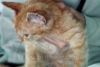 √ Cara Mengilangkan Jamur Pada Bulu Kucing Kesayangan