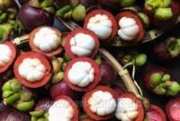 √ Cara Merawat Tanaman Manggis yang Benar (Panduan Lengkap)