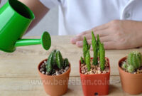 √ Ilmu Cara Menanam dan Merawat Kaktus Mini (Panduan Lengkap)
