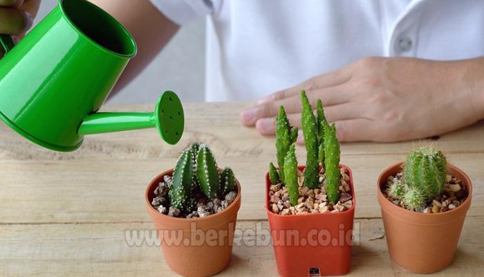 Ilmu Cara Menanam Dan Merawat Kaktus Mini Panduan Lengkap